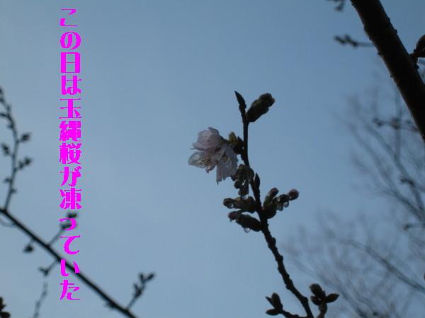 Img_1657_1_1